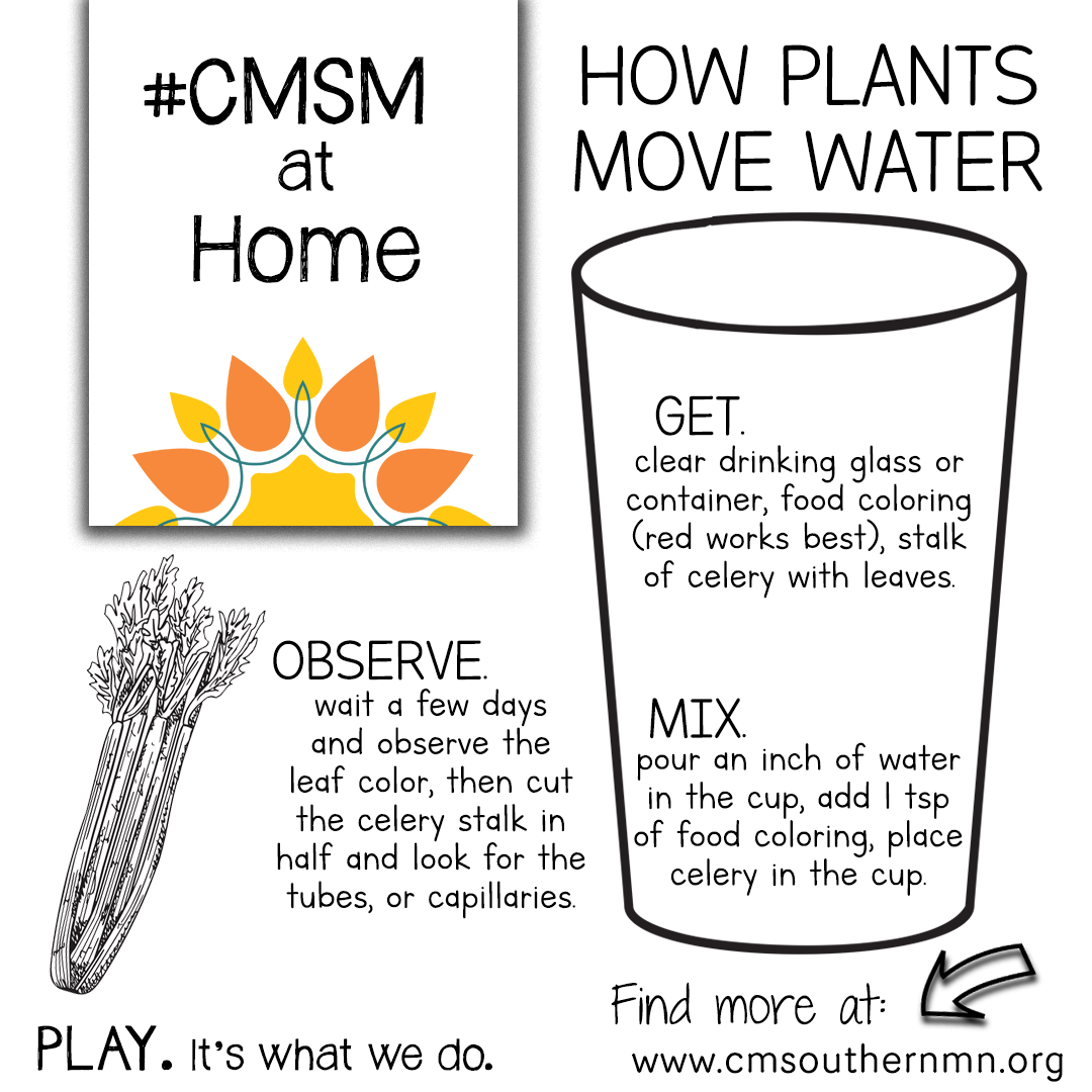 How Plants Move Water | CMSMatHome