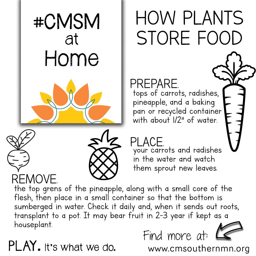 How Plants Store Food | CMSMatHome
