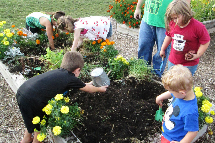 Harvesting potatoes in the garden beds at the Childrens Museum of Southern Minnesota