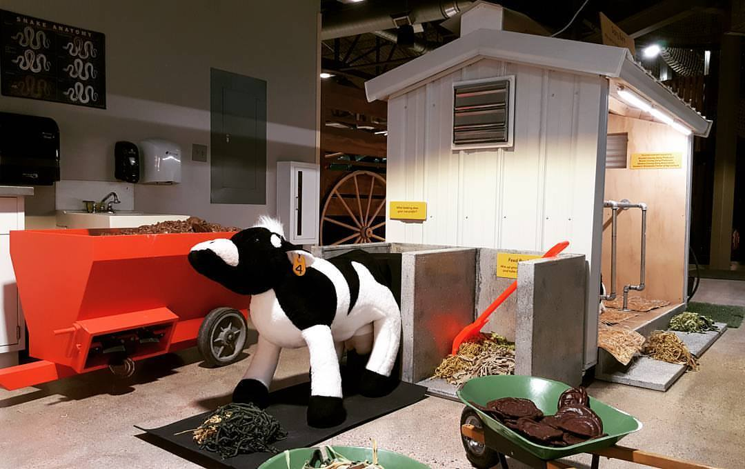 Dairy Barn Cow Care in the Ag and Nature Lab at the Children's Museum of Southern Minnesota in Mankato