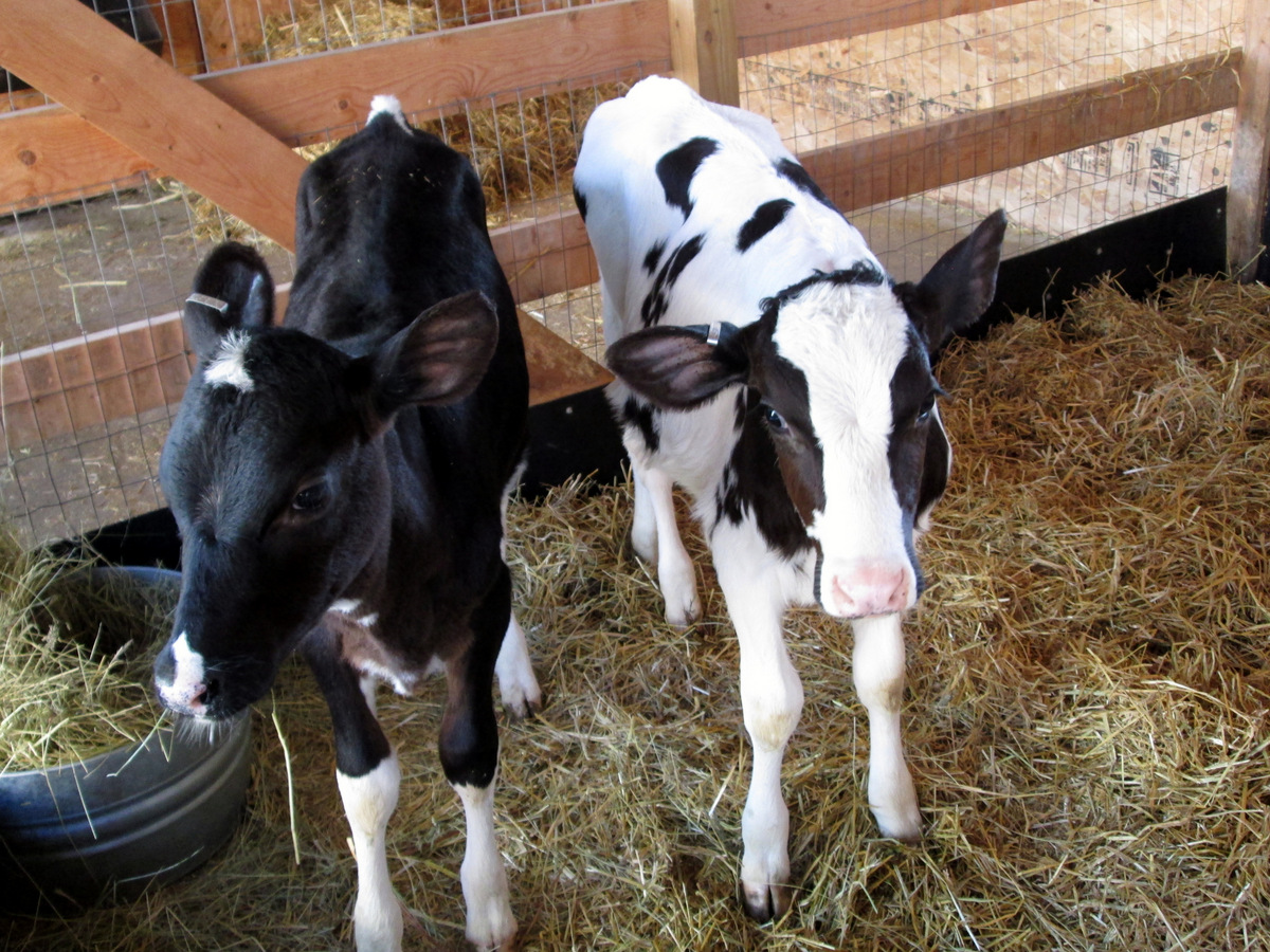 Discover Dairy at the Children's Museum of Southern Minnesota
